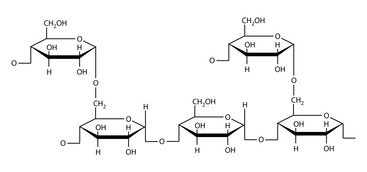 Polisacáridos Biomoleculas Carbohidratos